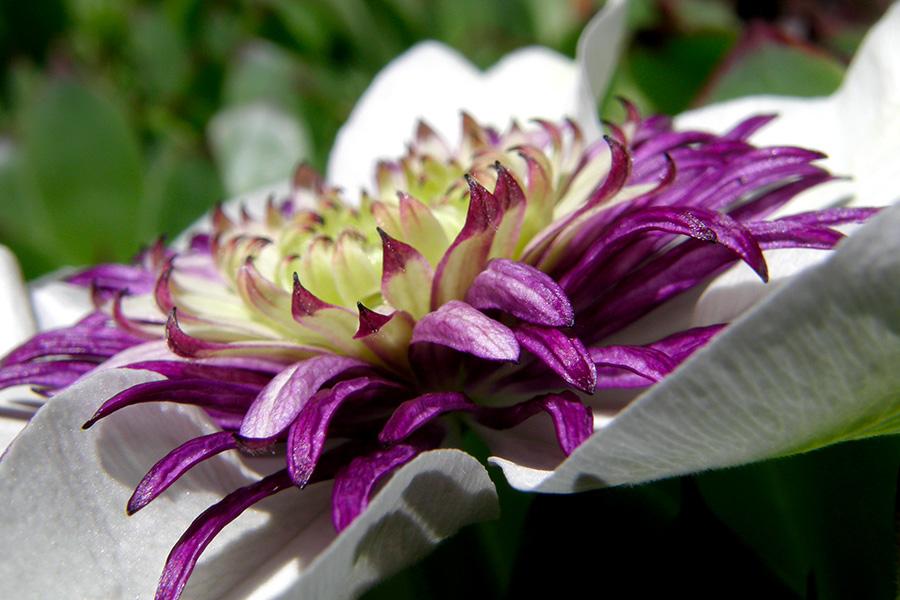 fleurs proche de cholet