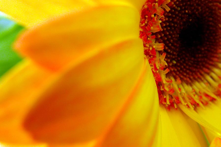 fleurs proche des épesses