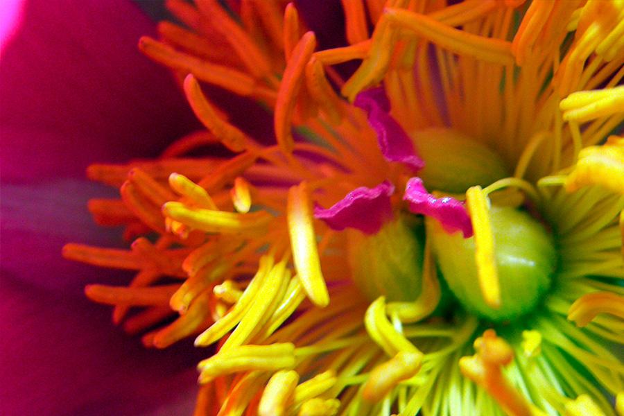 fleur pour pro, proche de mortagne sur sevre