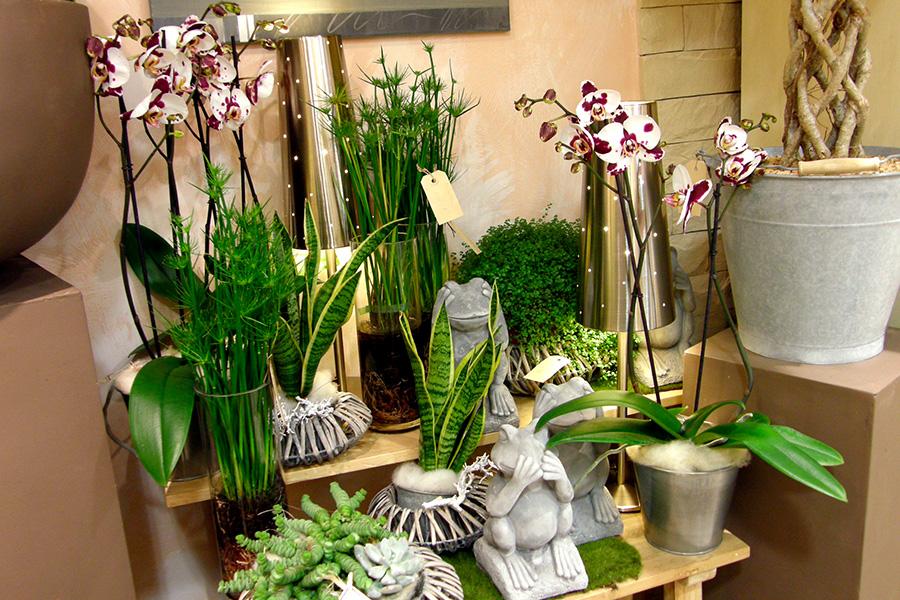 fleurs dans le 85 vendée